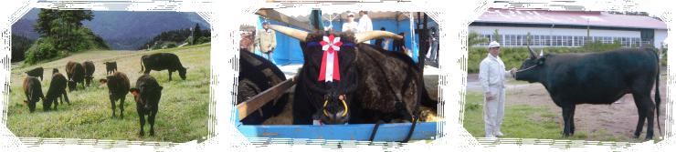 チャンピオン神戸牛